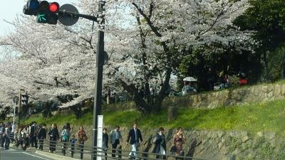 2011年の桜 018.JPG