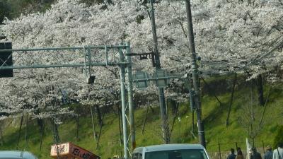 2011年の桜 015.JPG
