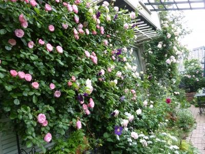 2011年5月26日薔薇の庭 045.JPG