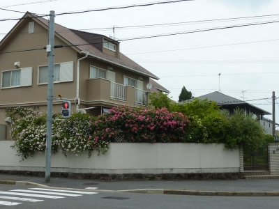 2011年5月26日薔薇の庭 036.JPG