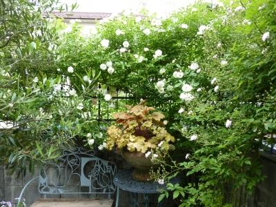 2011年5月26日薔薇の庭 043.JPG